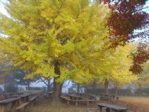 秋深まる紅葉