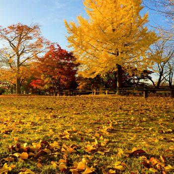 金賞:朝日を浴びて 撮影:斎藤誠
