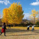 銅賞:イチョウの広場で 撮影:齋藤誠