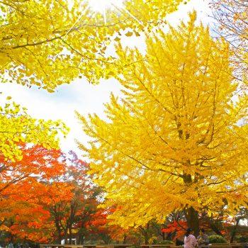 銅賞:坂本禮三 晩秋の陽光