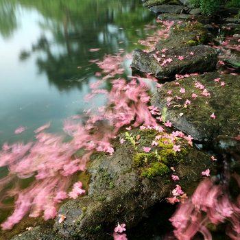 福島民報社賞:三浦正博 散花の岸辺